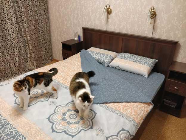 Спальня Шерлок орех