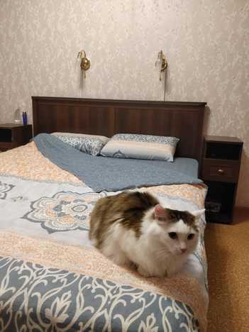 Кровать Шерлок орех с ортопедическим основанием